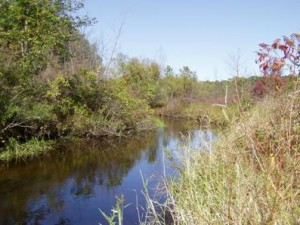 Portage Creek flows through Reichert Preserve