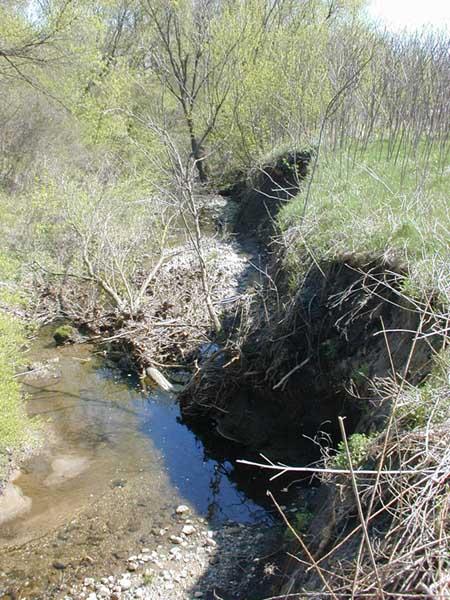 Eroding banks of Millers Creek