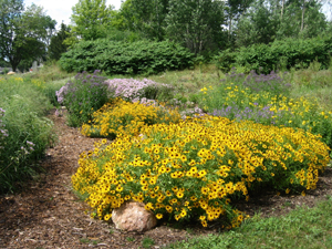 Rain water infiltration projects like this rain garden capture and help clean stormwater.
