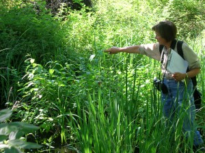 Volunteer Jane Hayes assessing a natural area in Unadilla Township.