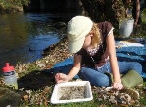Roundup Volunteer searching for critters. by Alison Battersby