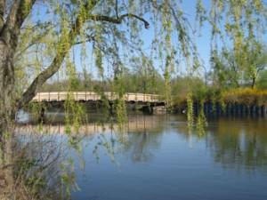 The Huron River At Gallup