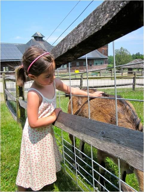 Girl petting goat