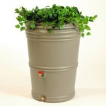 Rain Barrel with plants