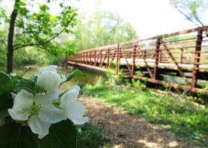 flower and bridge