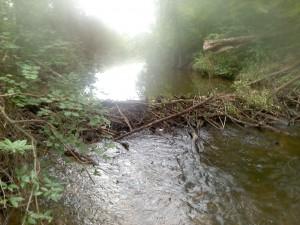 Huron River Portage Creek beaver dam