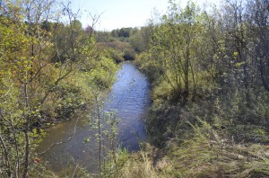 South Ore Creek at Bauer Road is shallow creek flowing through wetlands and forests.