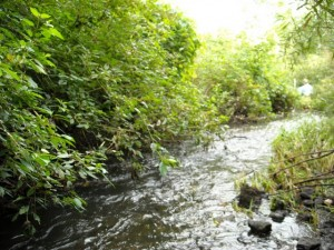 Norton Creek @ West Maple Road looks like it has nice habitat, but the water quality is very poor.