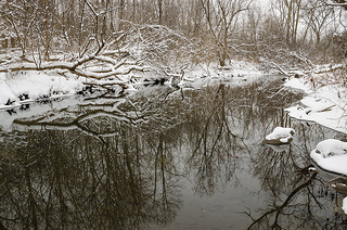 Winter scene in Fleming Creek