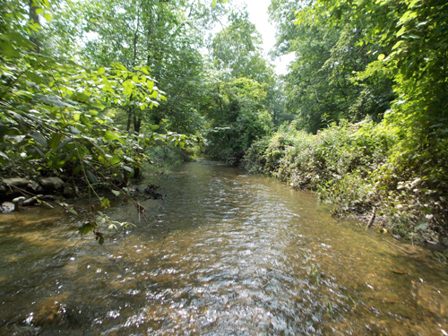 Woods Creek in July! Looks nice, doesn't it?