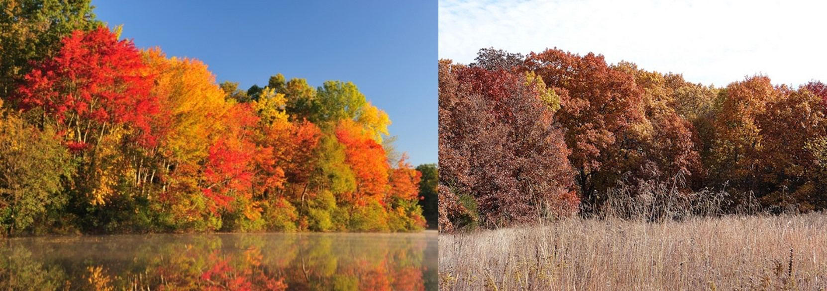 Fall color of a beech maple forest (left) and oak hickory forest (right)