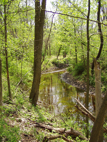 Beckwith Preserve on Portage Creek.  Photo Credit: Legacy Land Conservancy