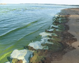 Algae bloom on Lake Erie, in 2011. Source: New York Times