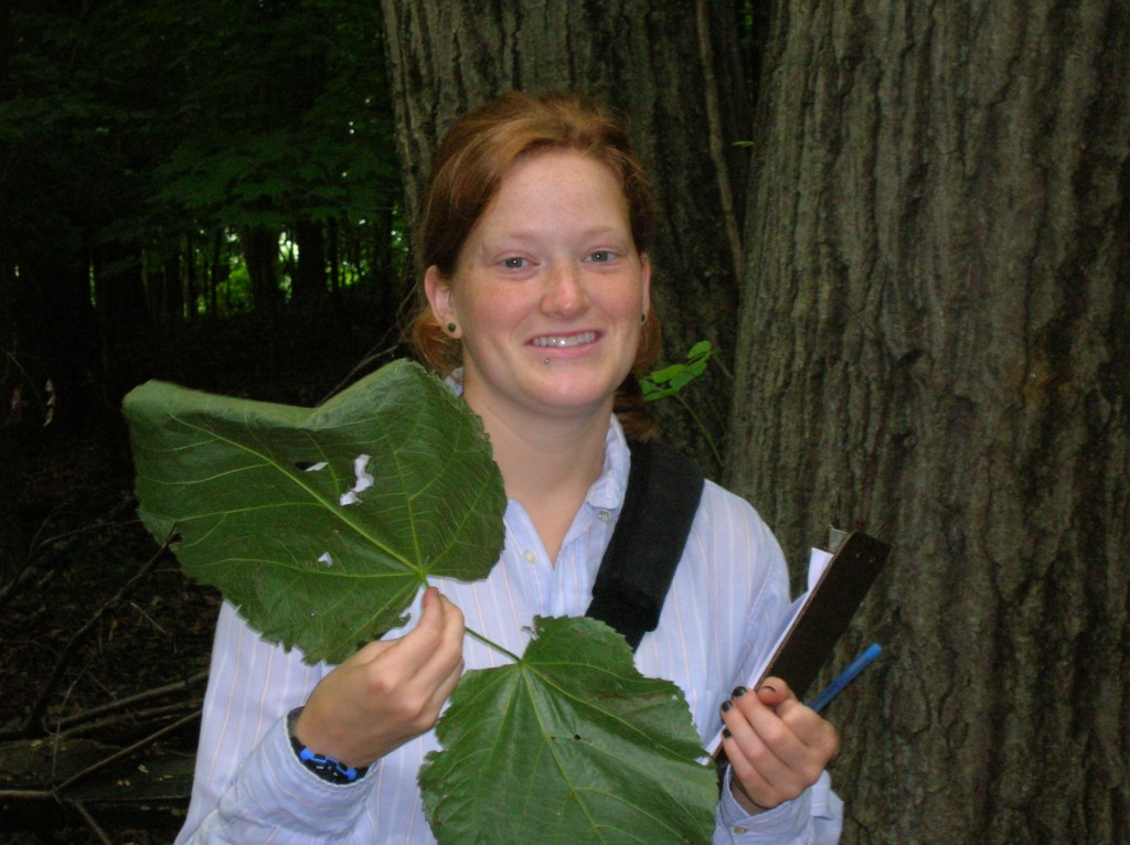 Erin Burkett examines giant leaves on a recent assessment. Can you identify the tree?