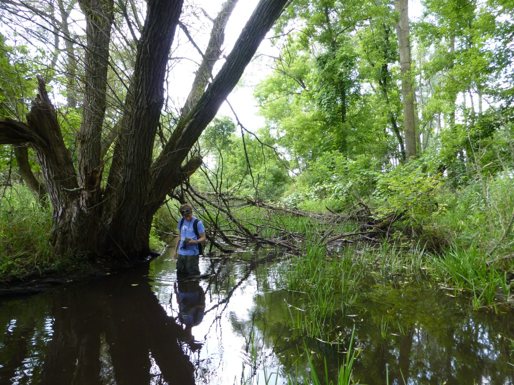 An HRWC volunteer explores Arms Creek.