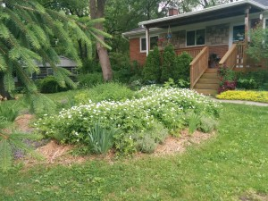 Renee's Rain Garden in Swift Run Neighborhood