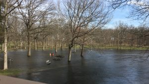 High flows on the Huron River in Dexter Township