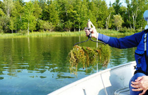 extracting aquatic plant sample