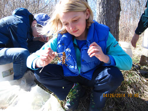 Emily checks out a crayfish! credit: Max Bromley