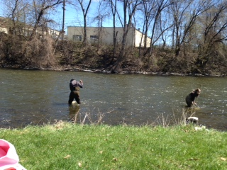 Sampling the Huron River by Riverside Park in Ypsilanti. credit: Kristen Baumia