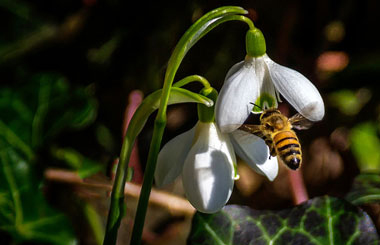 First Bee by Michael.PortrayingLife.com from Flickr.