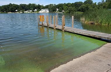 HAB at Spring Lake by Todd Marsee, Michigan Sea Grant.