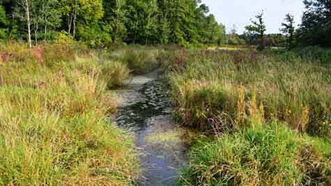 Wetlands along Livermore Creek west of Pinckney