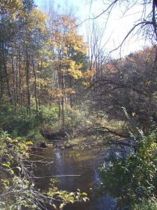 Vegetated stream buffers help keep Portage Creek healthy