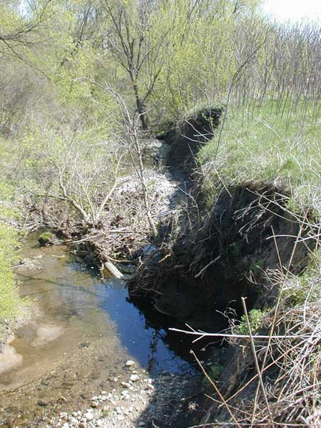Millers Creek Watershed in Ann Arbor
