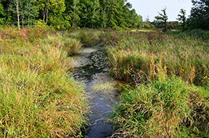 Wetlands in the Huron Riverwatershed